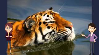 Interesting Video Book For Kids About Tigers