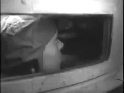 Seehund & Bieber midget submarines