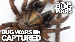 Bug Wars Captured   Compilation #2   MONSTER BUG WARS
