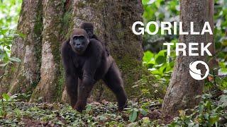 Jungle Trek Congo
