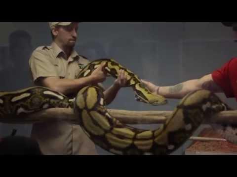 Intensitivity S01E02 - Maritime Reptile Zoo