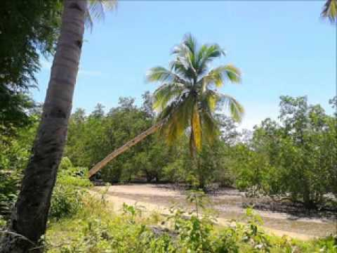 Roxas, Palawan - Leisure beach with Island views 4 SALE