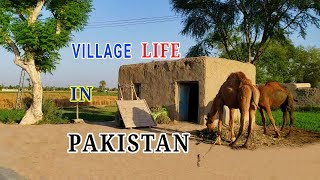 Pakistan Village Life Daily Routine   Pakistani Rural Punjab