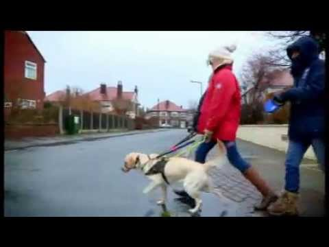 Guide Dog documentary to be aired tonight