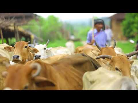 Official Jalyukt Shivar Abhiyan English Short Documentary | Government of Maharashtra |