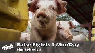 How To Raise Piglets in 3 Minutes