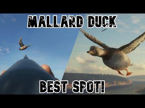 Best Spot For Mallard Ducks In TheHunter Call Of The Wild! (Hotspots, Etc...)