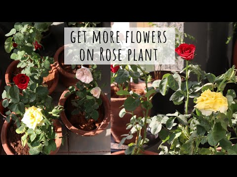 Simple Tips for Growing flowers at Home // Garden Up