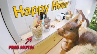 Movie Squirrels Nut Bar 3  Happy Hour