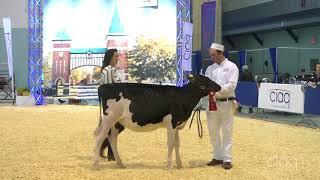 Suprême Laitier 2017 - Génisse Été - Holstein