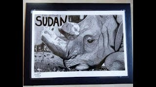 Drawing SUDAN The Last Northern White Male Rhino