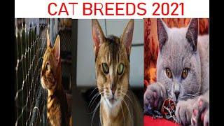 Cat Breeds 2021