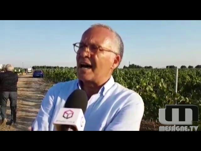 Tuffetto - Tenuta Lu Spada