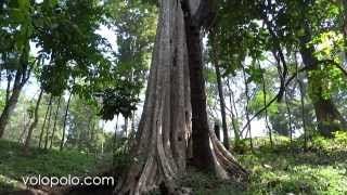 Amazing Tree in Nam Phut Thap Lao in Chaiyaphum, North East Th…