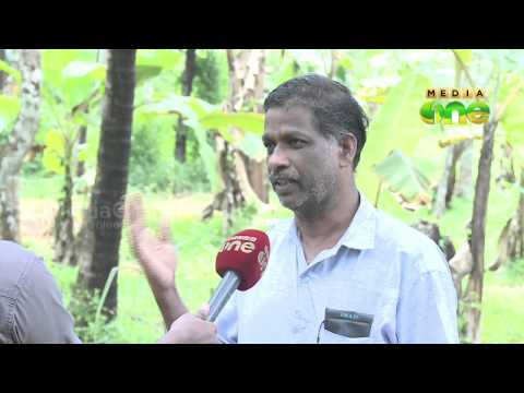 Neera production: Coconut farmers on financial crisis