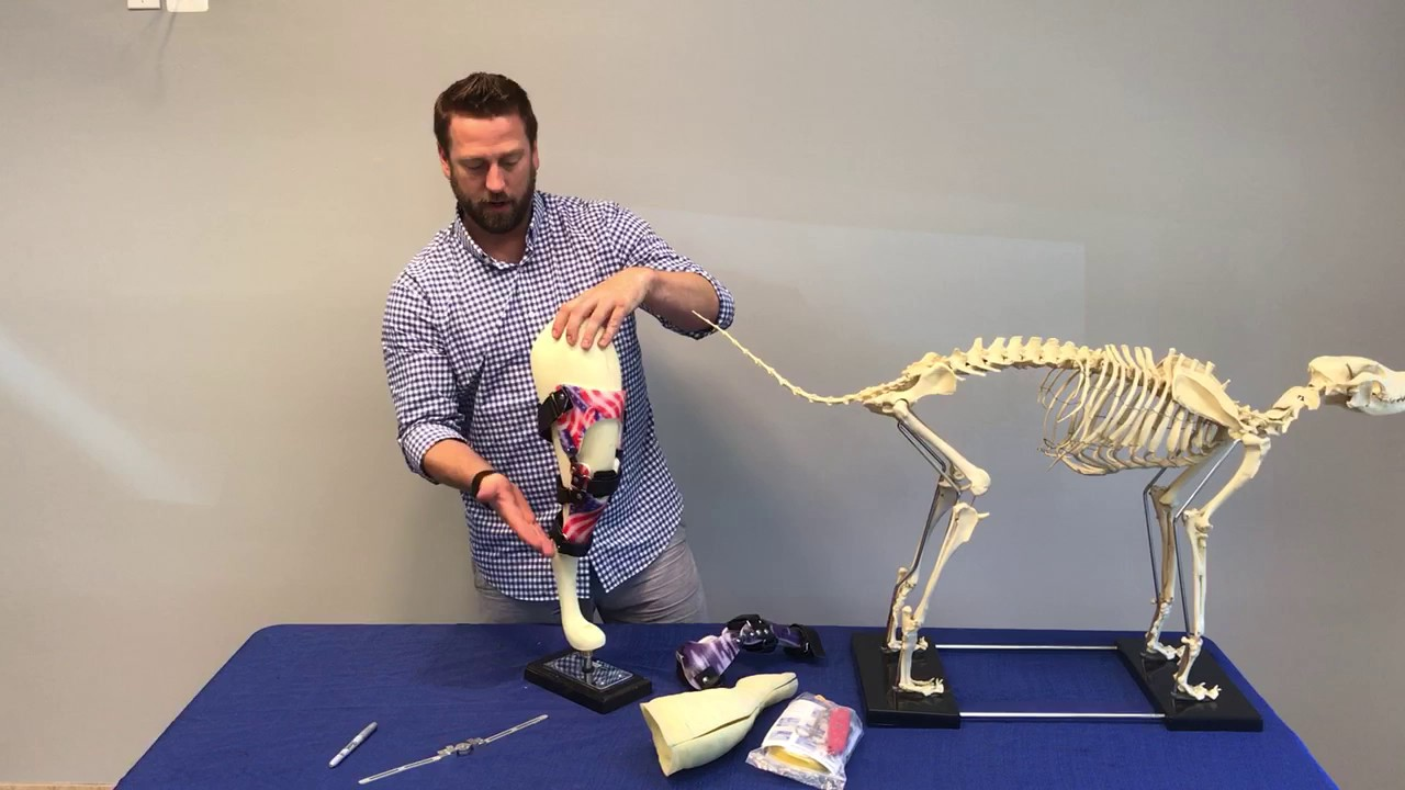 How to fit a dog knee brace | AOC Pet