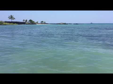 Sea Turtle ~ Honokohau Harbor, Kailua, Kona, Hawaii ~ Markin' Fish Sportfishing