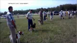 XI Всероссийская выставка охотничьих собак. ТУЛА 2012г.