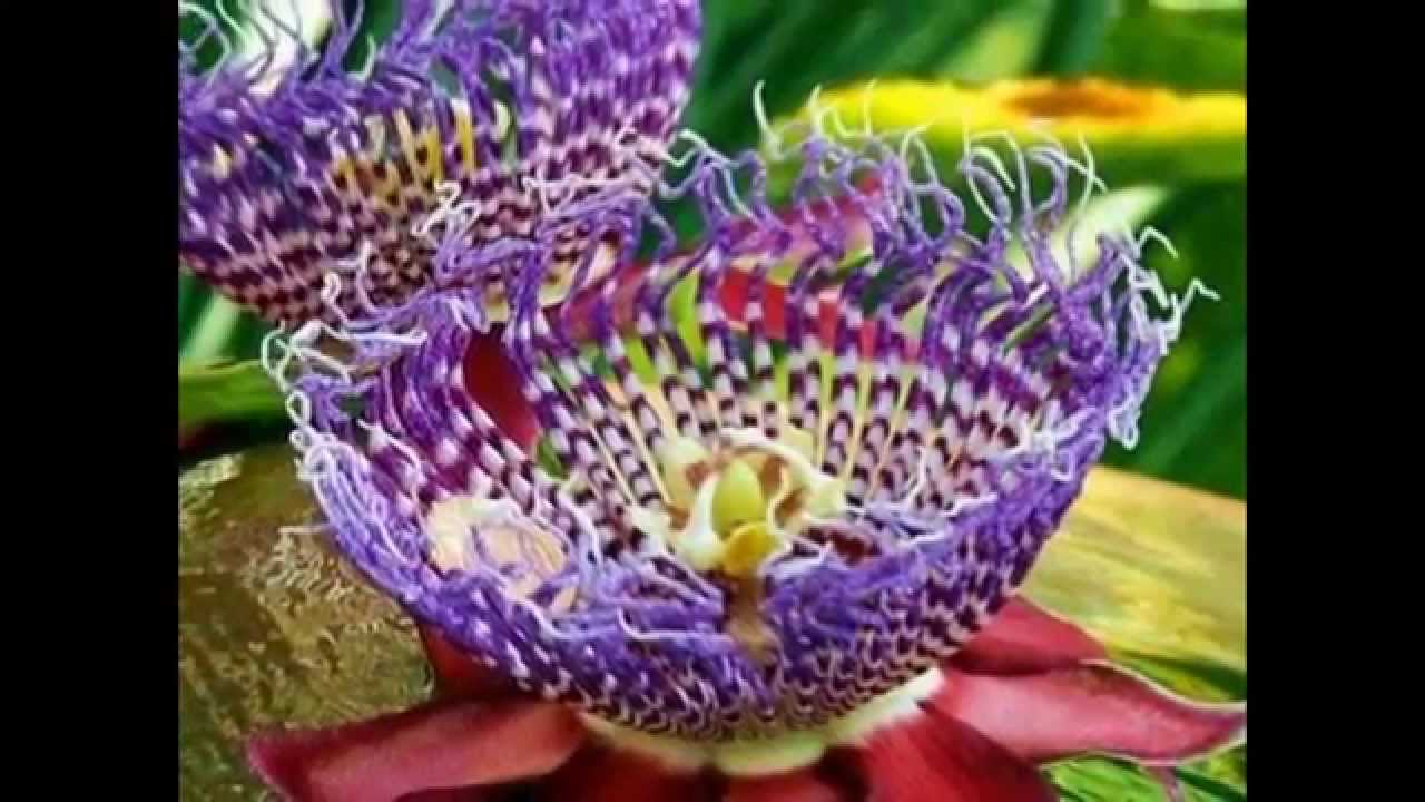 Top Most Beautiful Incredibly Rare Flowers Youtube