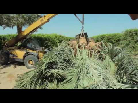 Date palm trees 0526277568 Suppliers in UAE