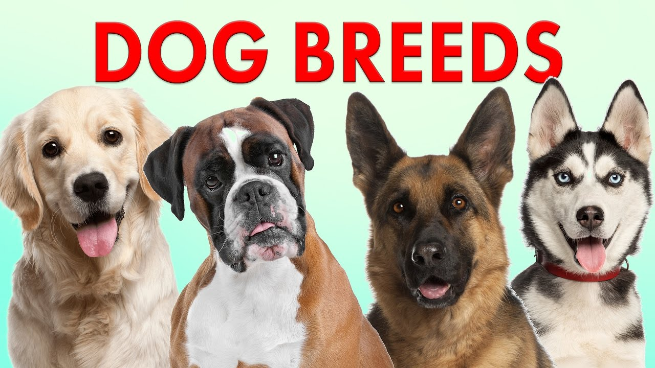 Breeds Of Dogs Part 1 Learn Different Types Of Dogs Dog Breeds 101 Youtube