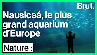 Visite guidée de l'aquarium Nausicaá
