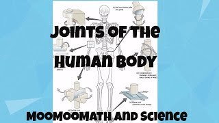 Joints in Human Body