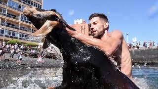 Baño de las cabras por el día de San Juan 2019 - Puerto de la Cruz