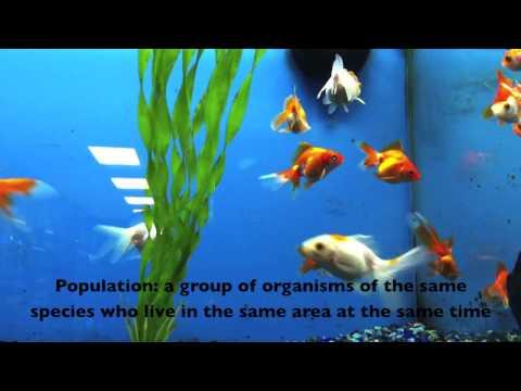 5.1.1 Define species, habitat, population, community, ecosystem and ecology