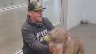 'That's my boy!' Man reunited with missing dog after 200 days apart