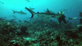 видео Курс IART Advanced Nitrox Diver