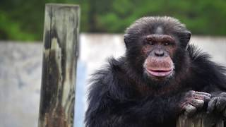 5 People Who Fell Into Animal Enclosures At Zoos!