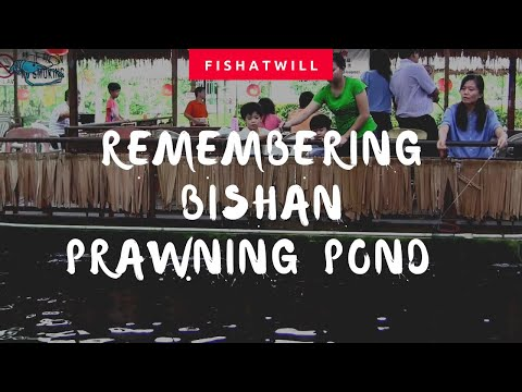 Singapore Prawn Fishing - Remembrance Of Bishan Prawning Pond