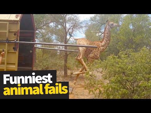 Funniest Animal Fails Caught on Camera 2019