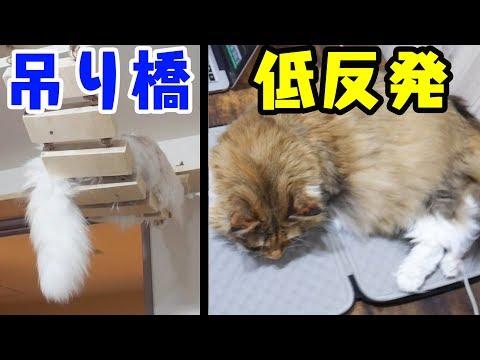 寝床のクセが強すぎる猫たち。