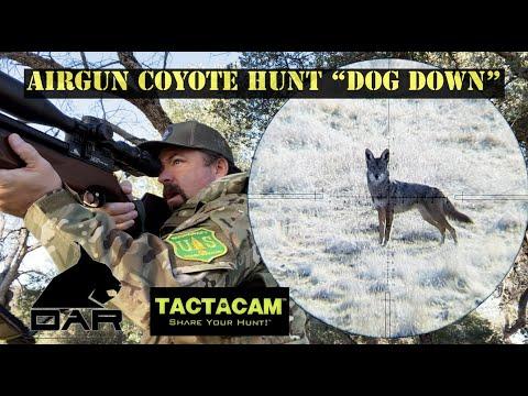 "Airgun Coyote Hunt ""Dog Down"""