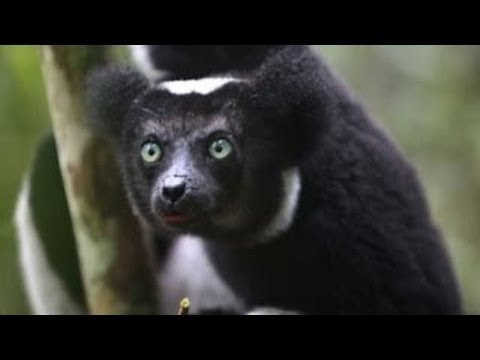Madagascar -­‐ Biodiversity Hot Spot, Part 1 | Vanishing Planet | Reserve Channel