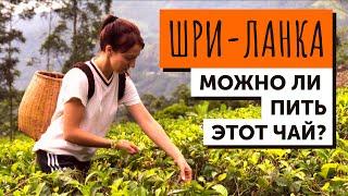 ШРИ ЛАНКА. Как собирают и обрабатывают лучший чай в мире. Разбираемся в качестве.