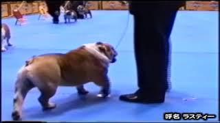 (キング・ブル犬舎 種牡犬) グリンディ・ラスティー・ドラゴン 2004年...