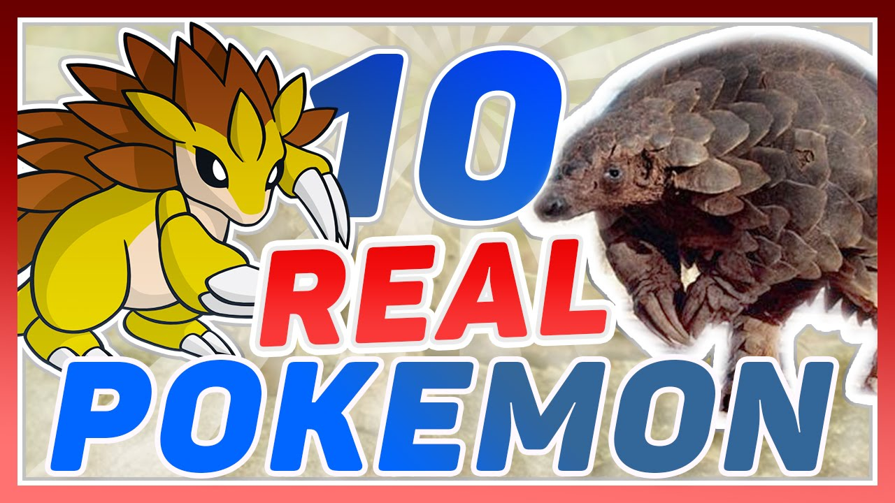 10 real life pokemon youtube. Black Bedroom Furniture Sets. Home Design Ideas