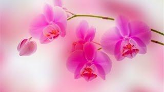 орхидея из бисера .часть 2