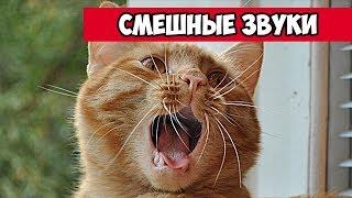 Смешные звуки животных | Bazuzu Video ТОП подборка июль 2017