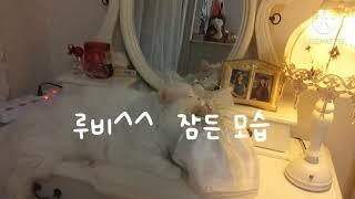 [캣맘칼림바]럭셔리 고양이 루비^^  잠든 모습