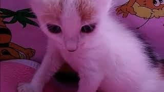 Днепр.Нашла и выкормила котят.Ищу малышам тёплый дом и заботливую семью.
