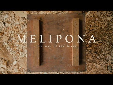 MELIPONA | The Way of the Maya - FS7 II competition