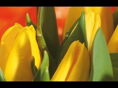 Круглосуточная доставка цветов, скидки, фото вручения!