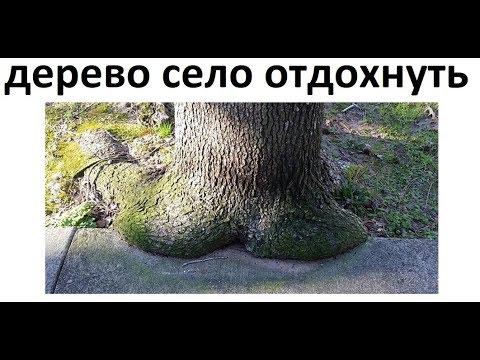 Лютые приколы. Дерево присело отдохнуть