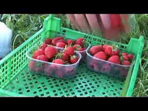 Coleshill Organics - Organic Veg Box & Farm Shop