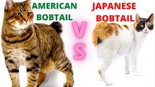 Should You Get an American Bobtail Cat or a Japanese Bobtail Cat?  (Breed Comparison)!