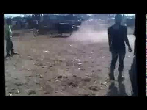 bakrid 2013 bef sauver park albion